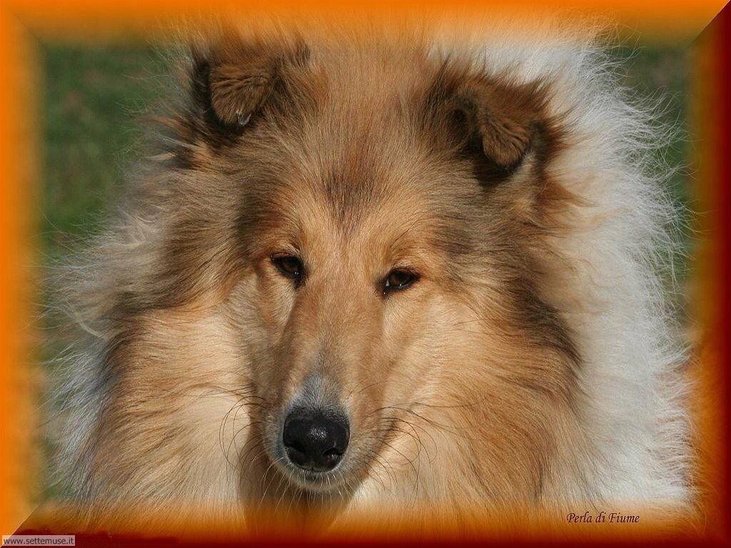 Foto sfondi Cani e cuccioli 041