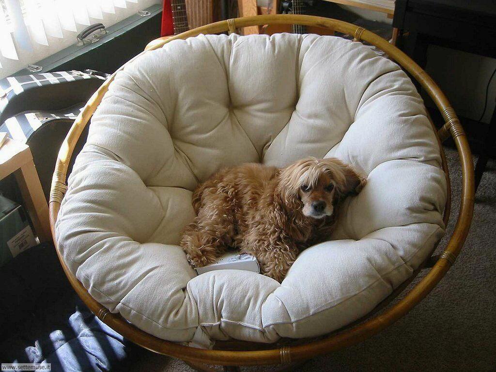 Foto sfondi Cani e cuccioli 042