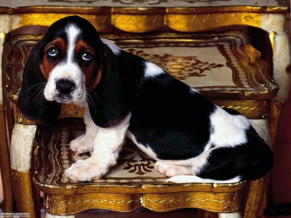 Foto sfondi Cani e cuccioli 043