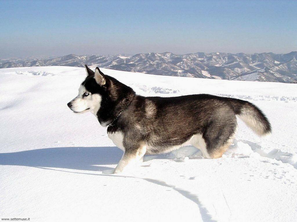 Foto sfondi Cani e cuccioli 045