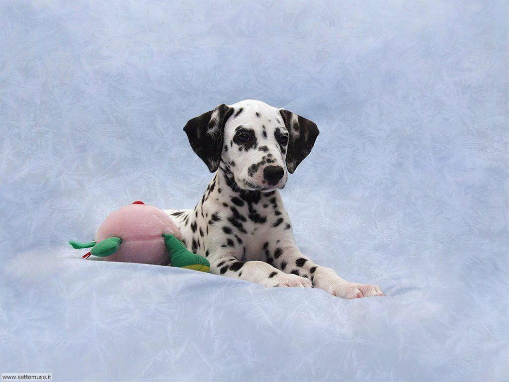 Foto sfondi Cani e cuccioli 046