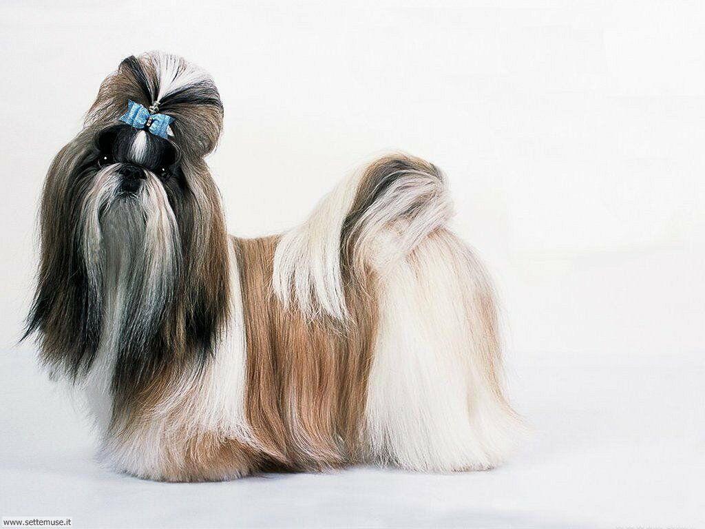 Foto sfondi Cani e cuccioli 049