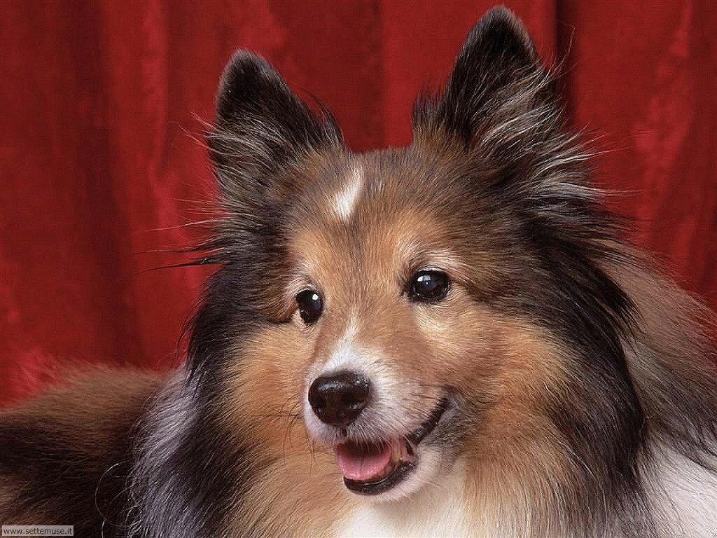 Foto sfondi Cani e cuccioli 051