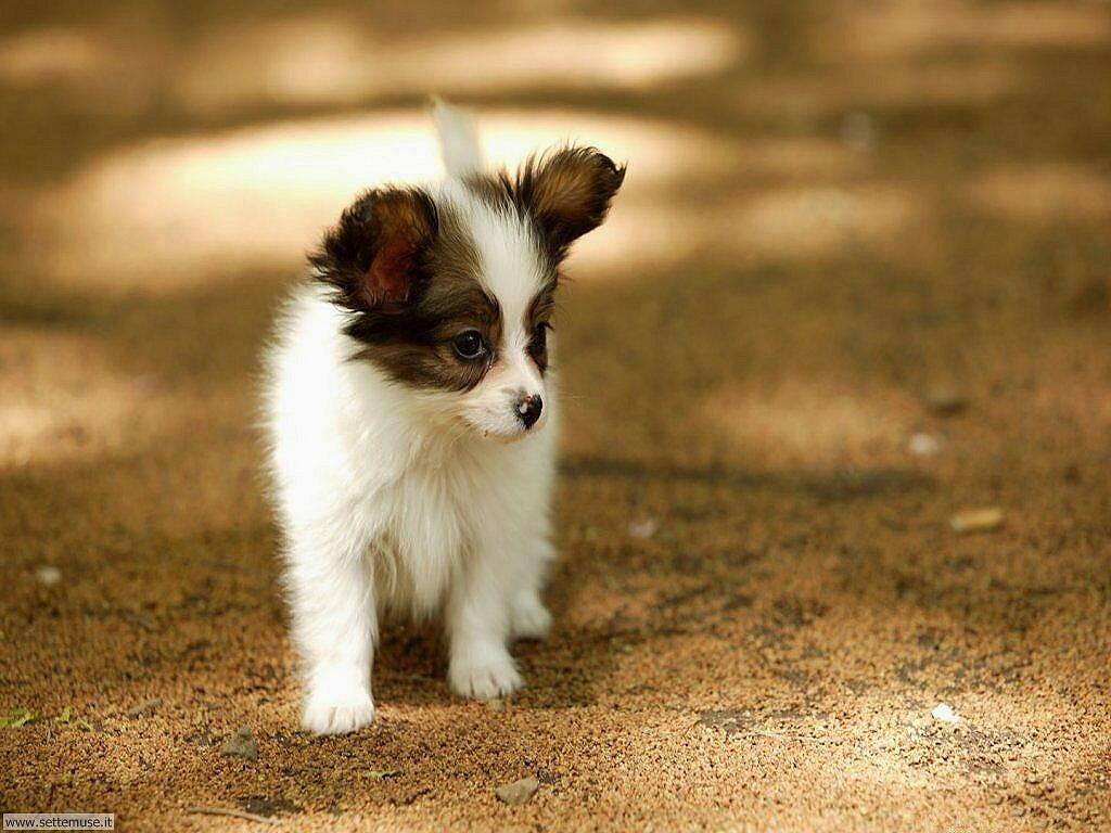 Foto sfondi Cani e cuccioli 052