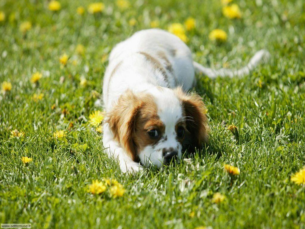 Foto sfondi Cani e cuccioli 053