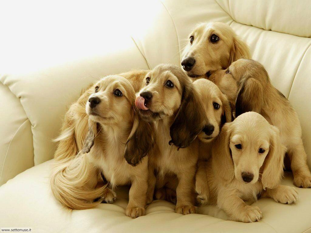 Foto sfondi Cani e cuccioli 057