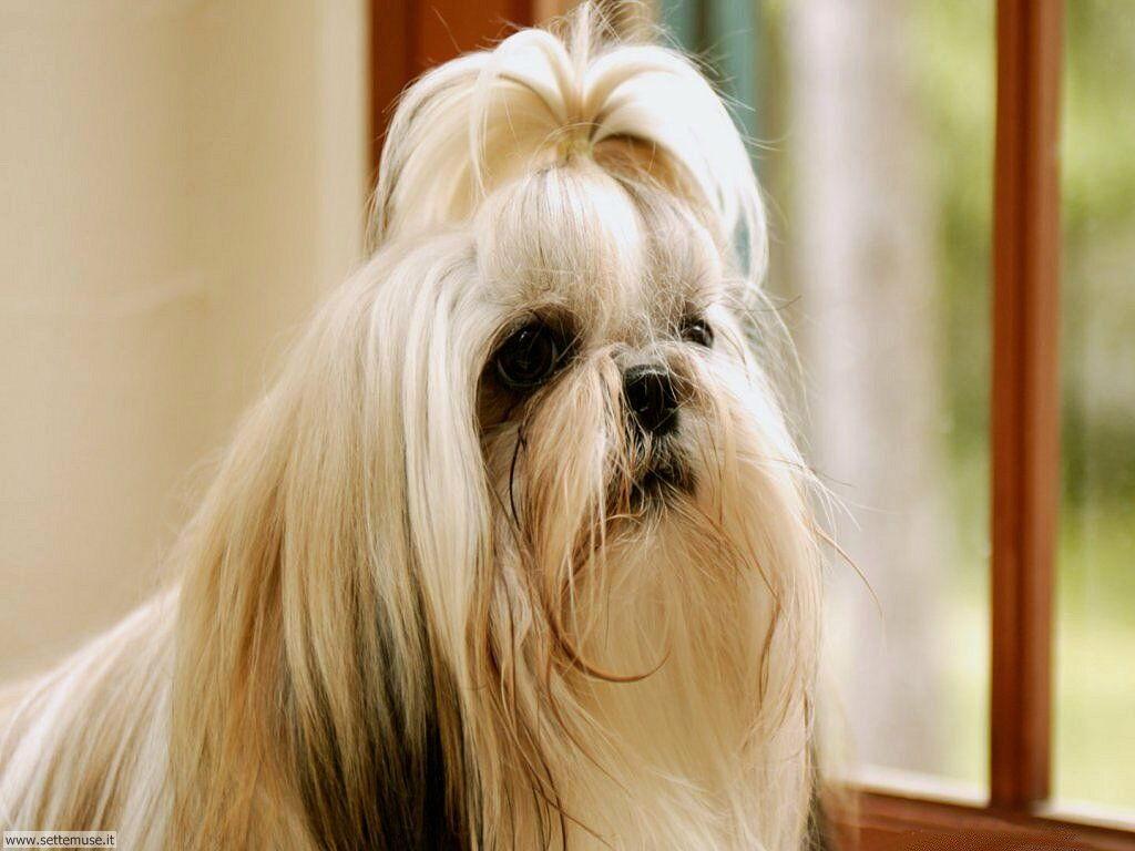 Foto sfondi Cani e cuccioli 058