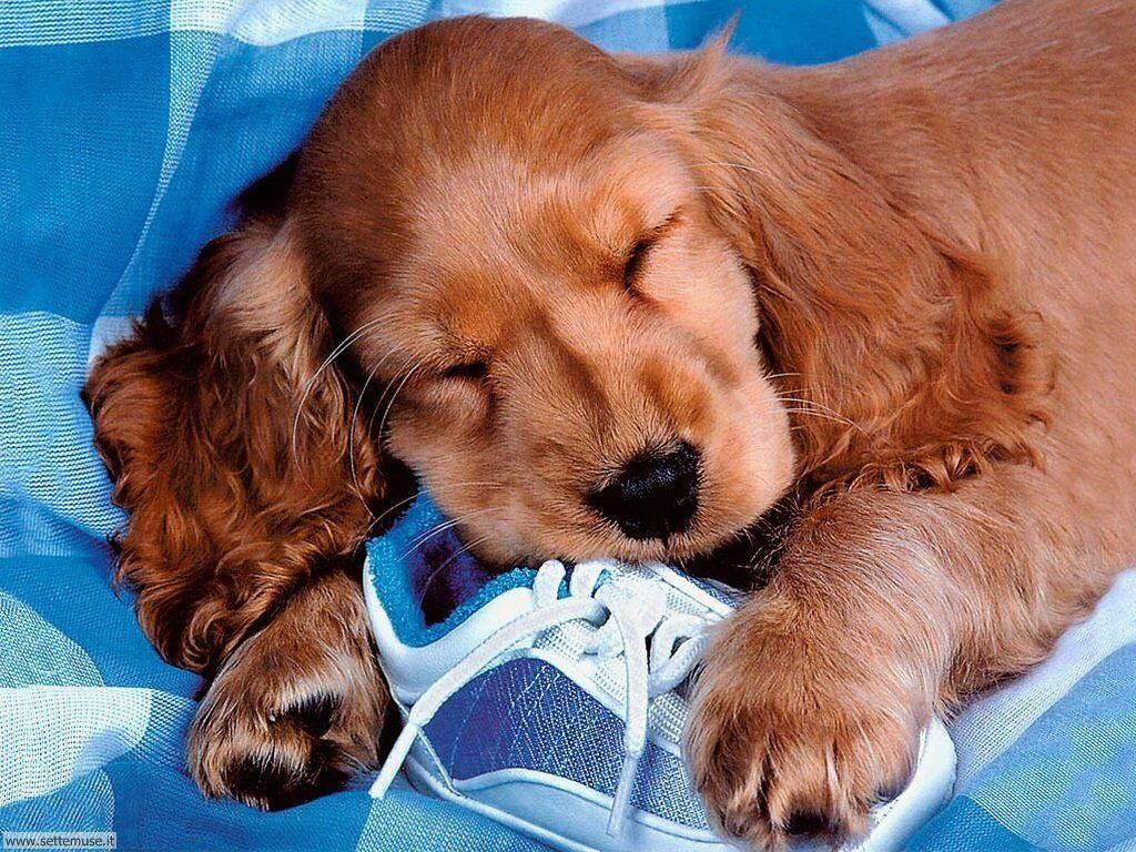 Foto sfondi Cani e cuccioli 059