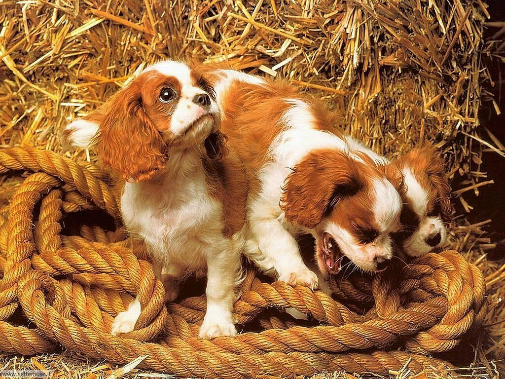 Foto sfondi Cani e cuccioli 061