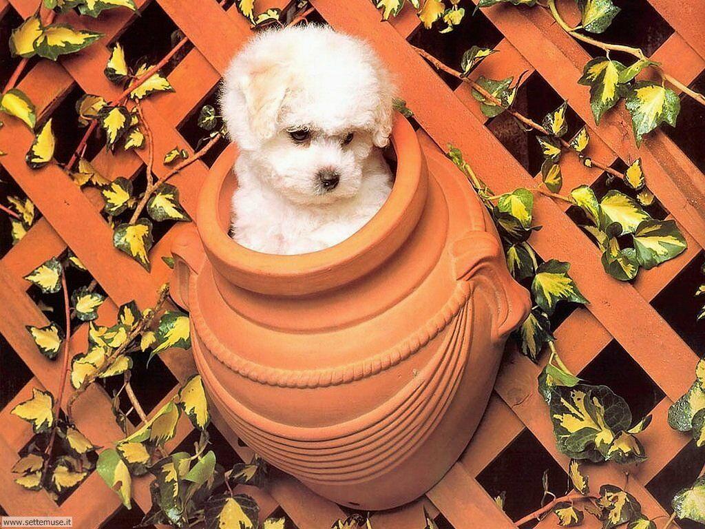 Foto sfondi Cani e cuccioli 062