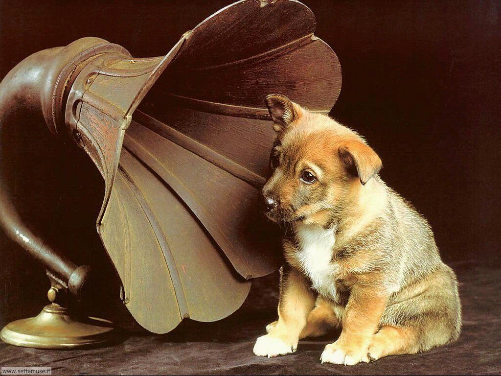 Foto sfondi Cani e cuccioli 063