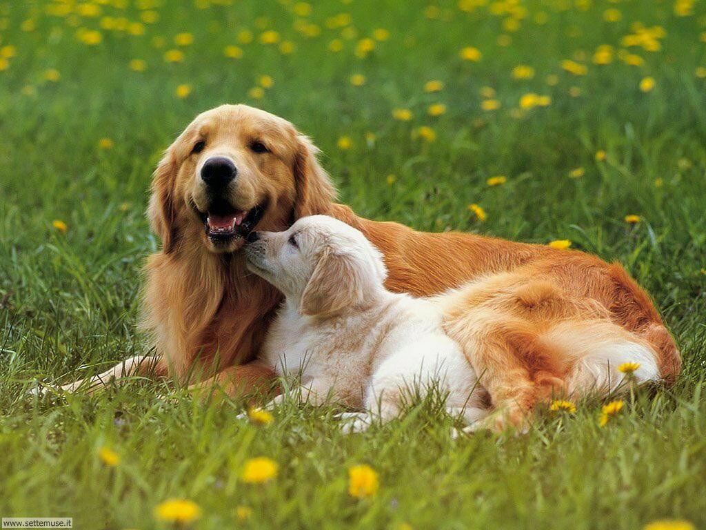 Foto sfondi Cani e cuccioli 068