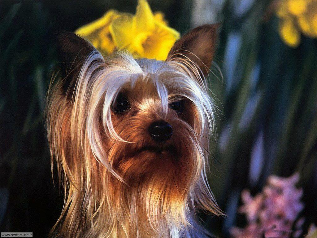 Foto sfondi Cani e cuccioli 069