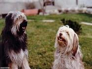Foto sfondi cani