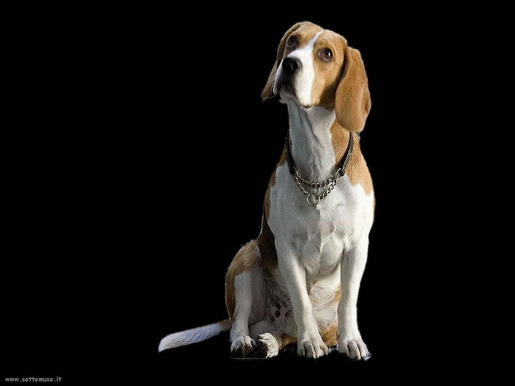 Foto sfondi Cani e cuccioli 075