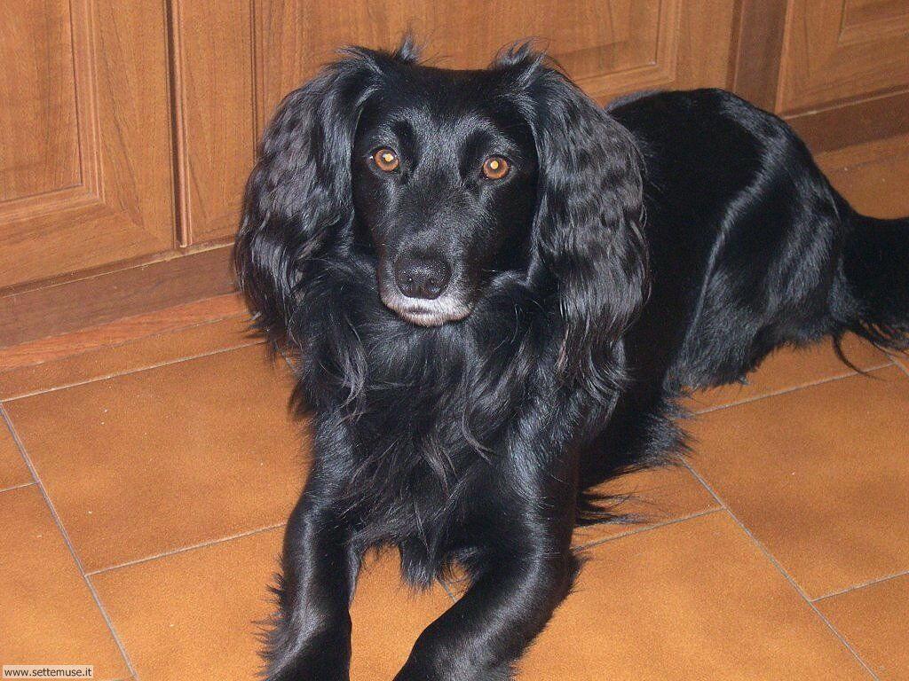 Foto sfondi Cani e cuccioli 076