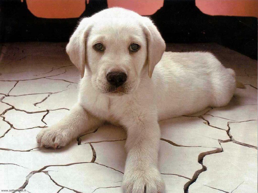 mammiferi cani e cuccioli _083.jpg