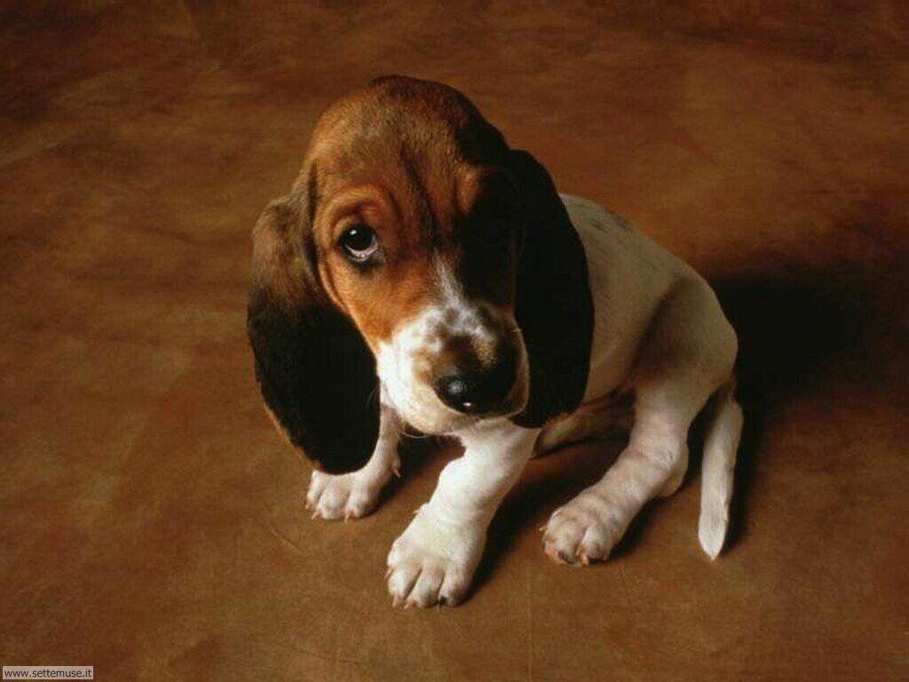 mammiferi cani e cuccioli 090.jpg