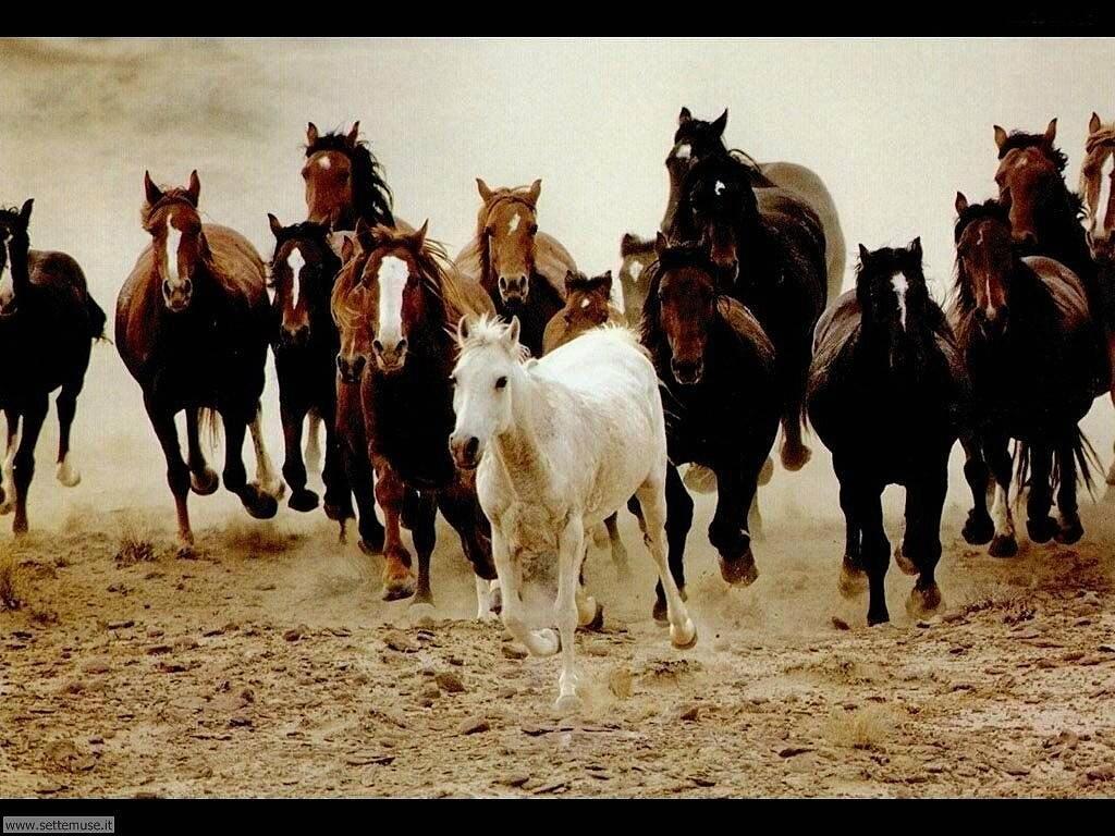 Foto sfondi Cavalli 005