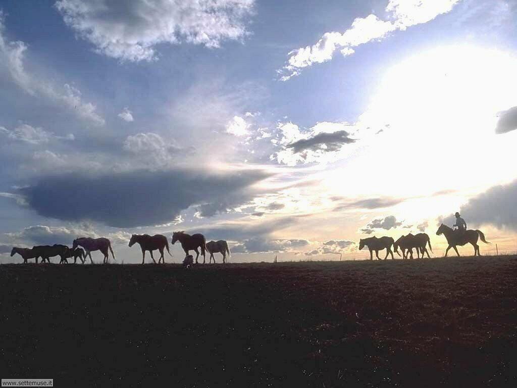 Foto sfondi Cavalli 006