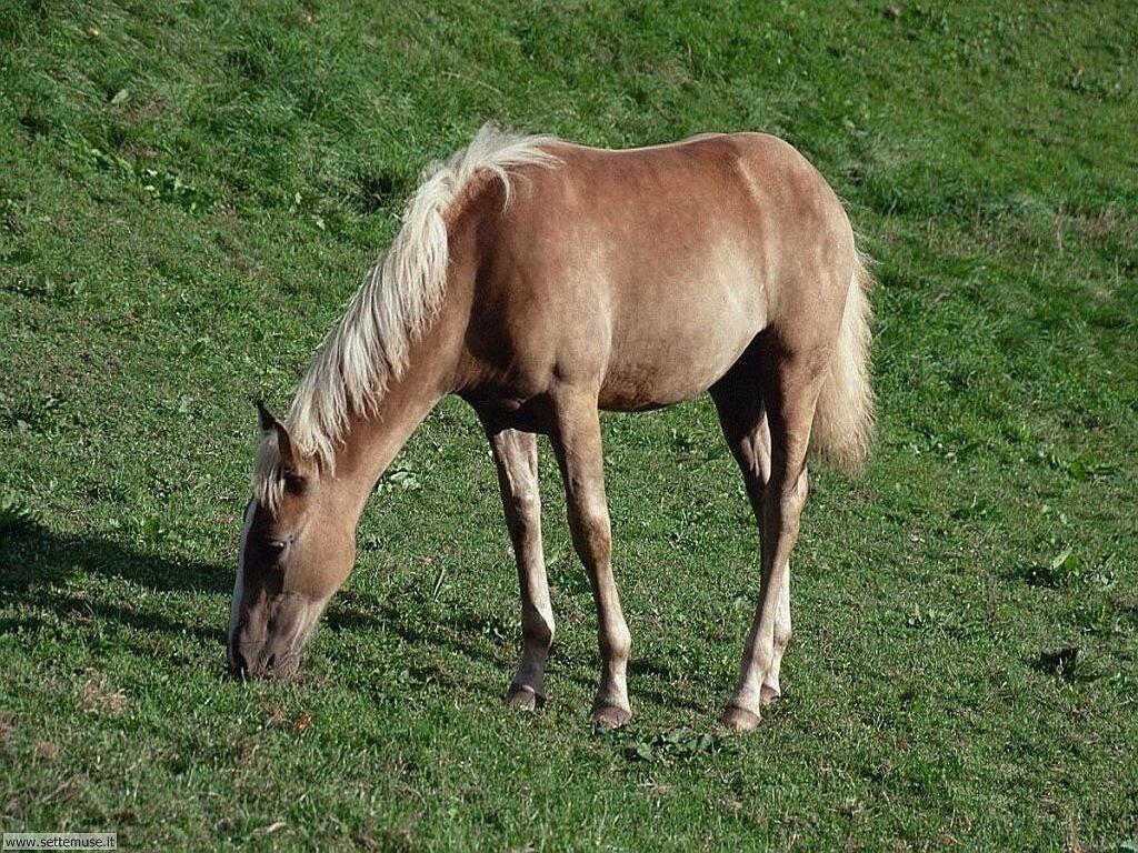 Slideshow foto cavalli for Sfondi cavalli gratis