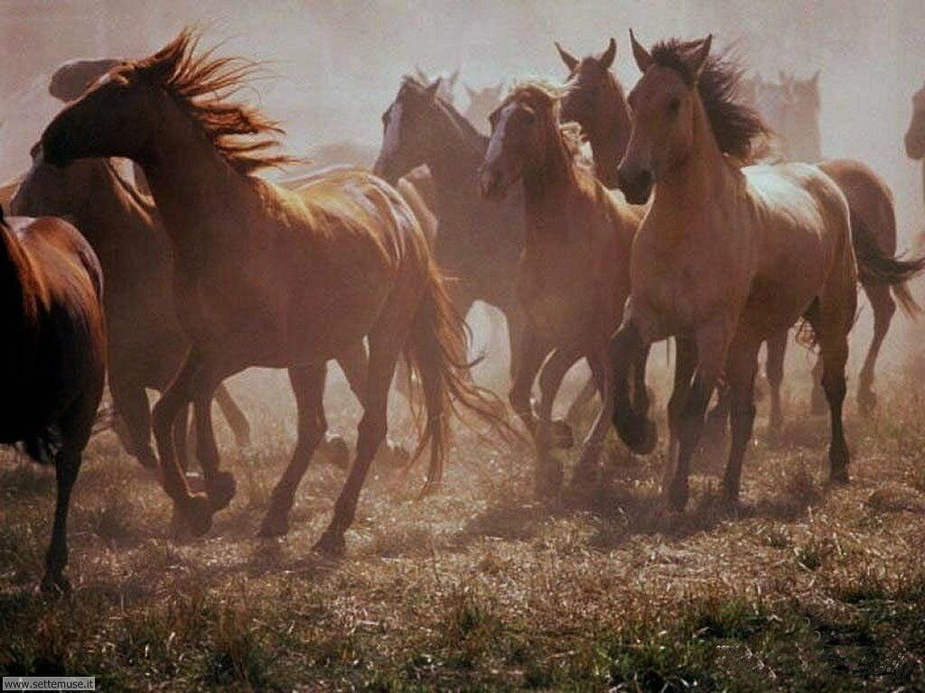 Foto Cavalli Per Sfondi Pc Settemuseit