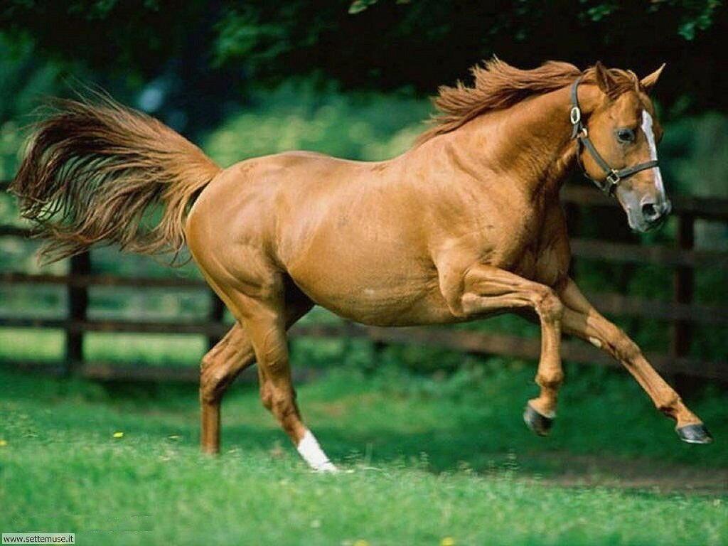 Foto sfondi Cavalli 021
