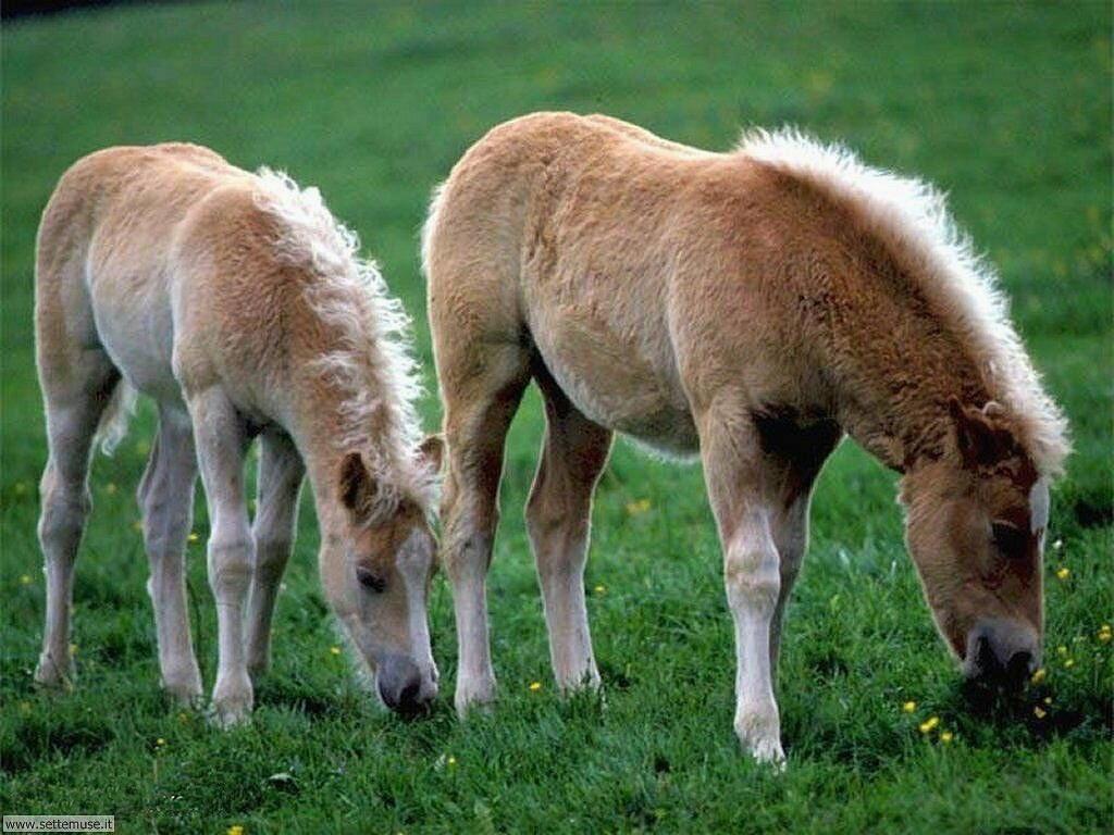 Foto sfondi Cavalli 022