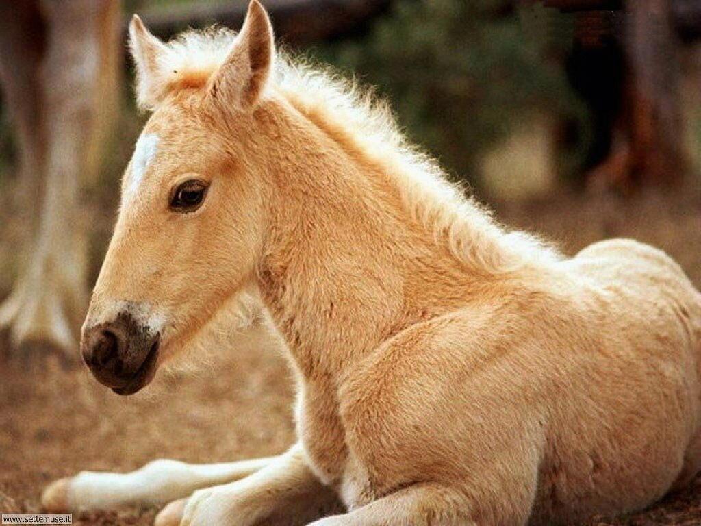 Foto cavalli per sfondi pc for Immagini disegni cavalli