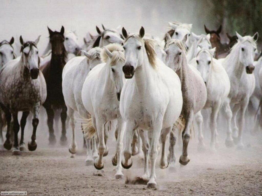 Foto sfondi Cavalli 035