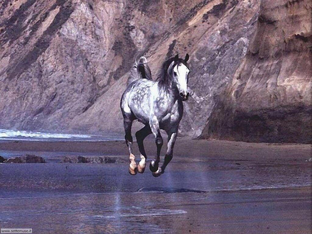 Foto sfondi Cavalli 036