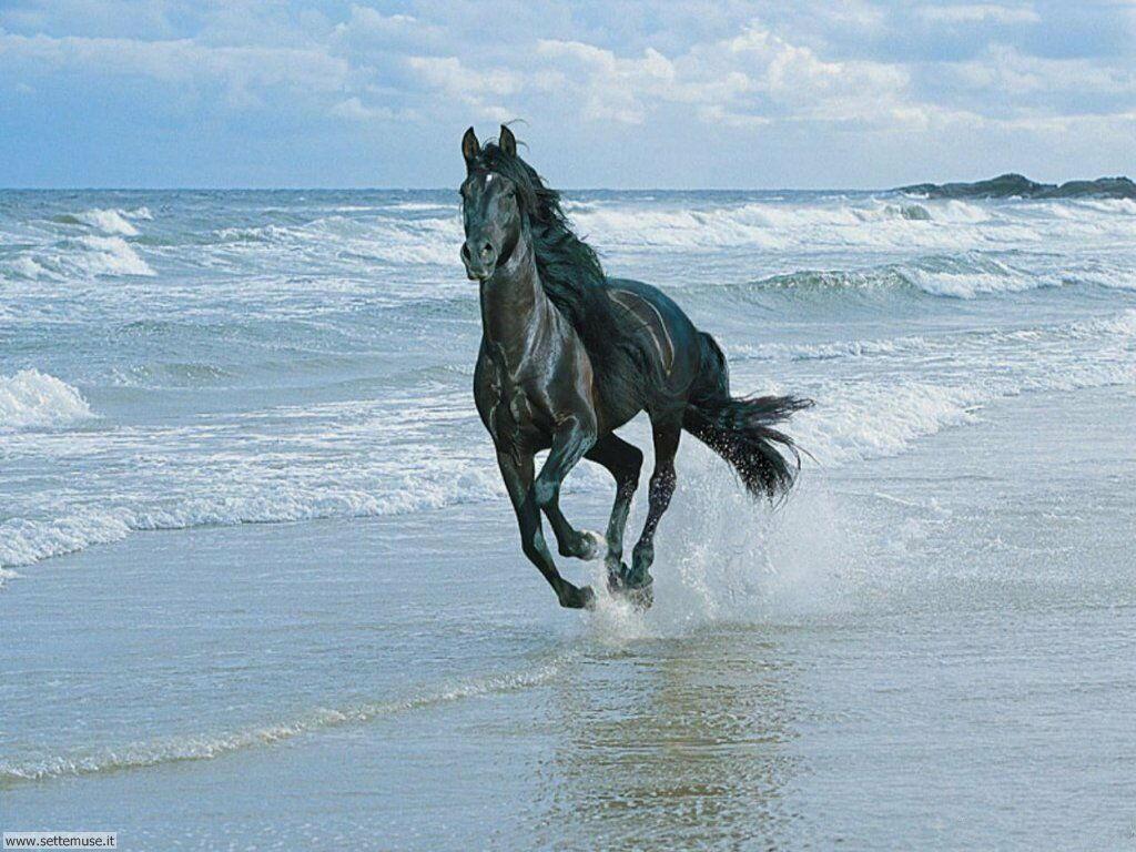 Foto sfondi Cavalli 038