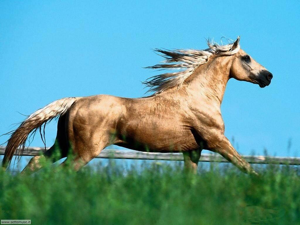 Foto sfondi Cavalli 040