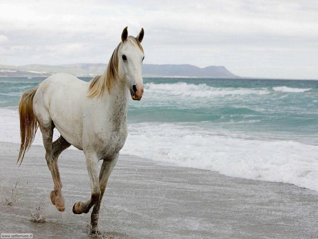 mammiferi cavalli _055.jpg