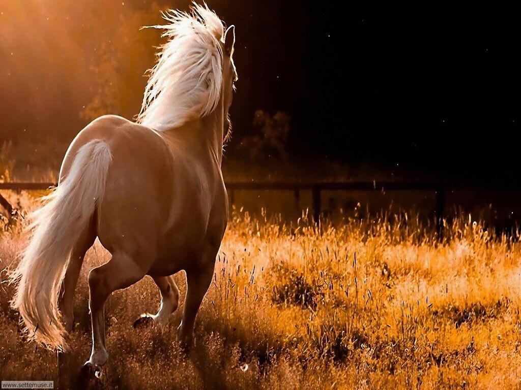 mammiferi cavalli _057.jpg