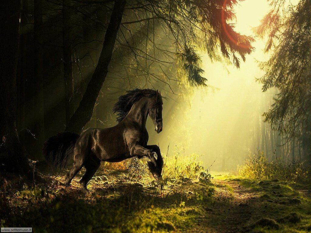 mammiferi cavalli _058.jpg