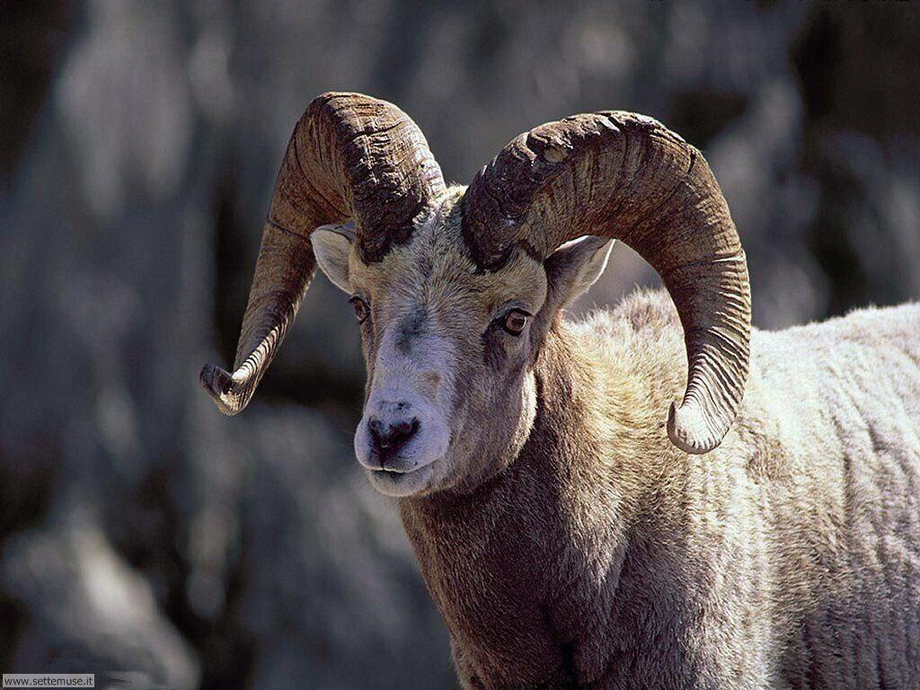 foto cervi renne daini alci 23