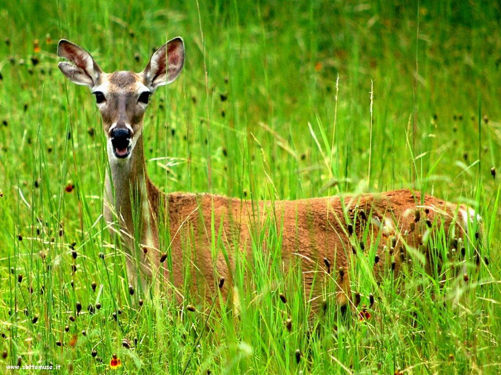 foto cervi renne daini alci 29
