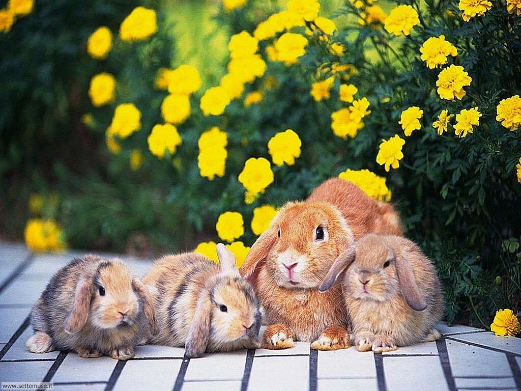 Foto conigli per sfondi pc for Animali desktop