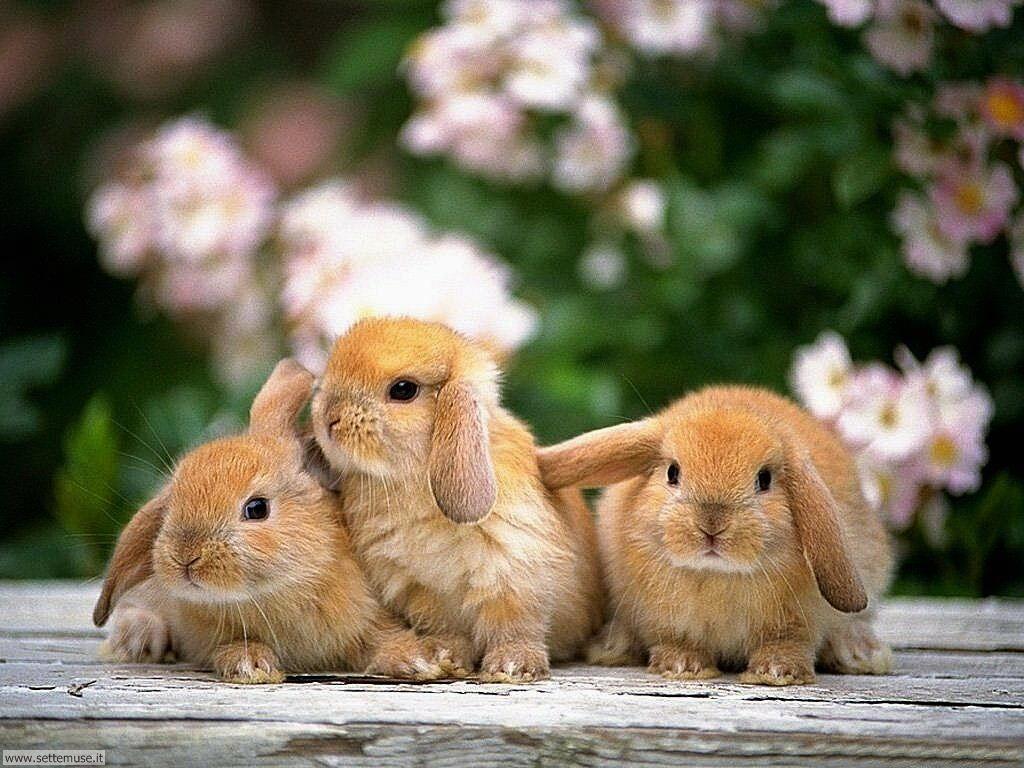 foto di conigli coniglietti e lepri per sfondi
