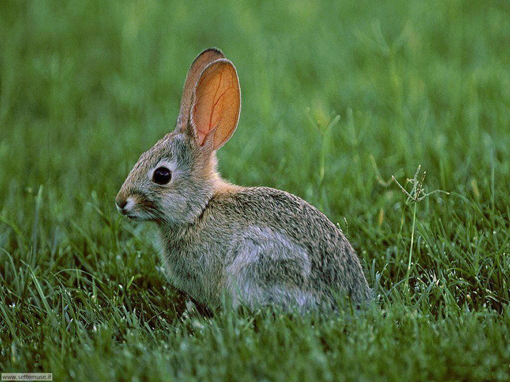 Foto conigli per sfondi pc for Lepre immagini da stampare