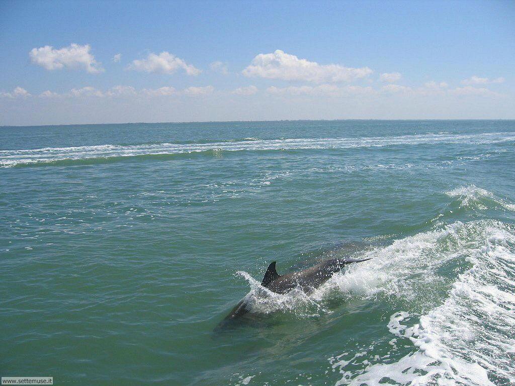 delfini 7