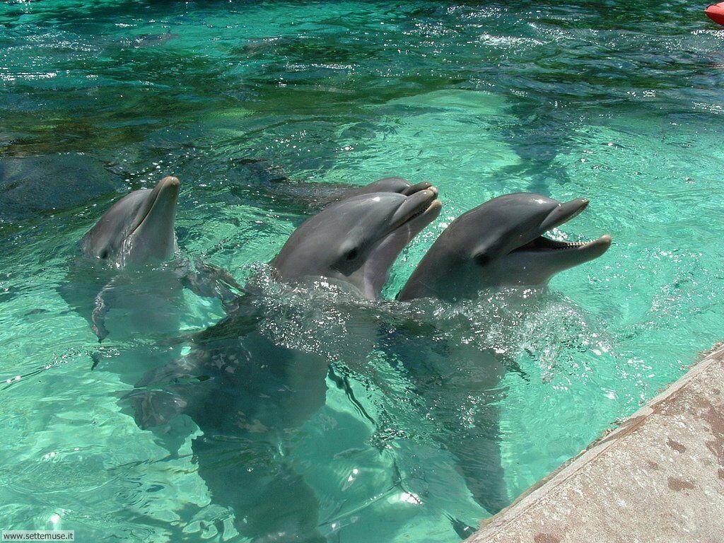 delfini 9
