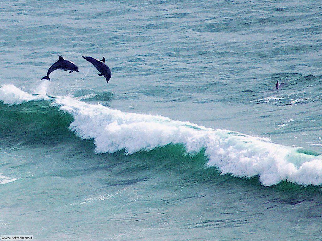 delfini 13