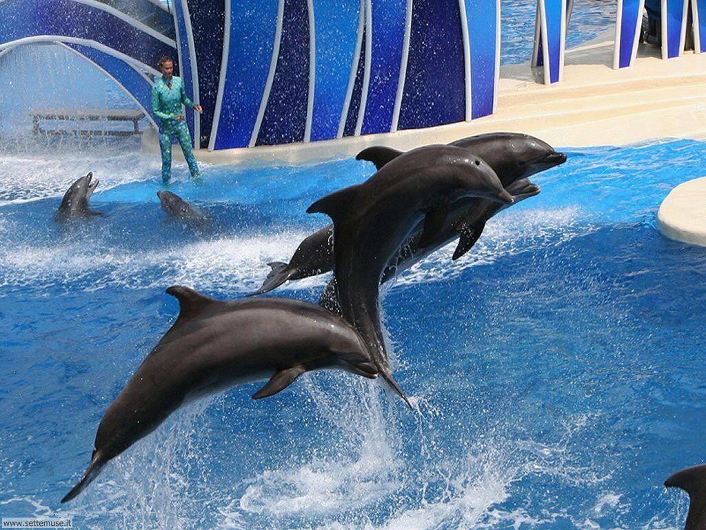 delfini 15