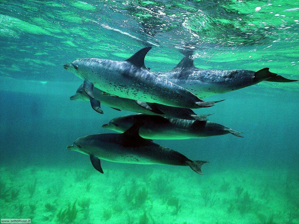 delfini 19