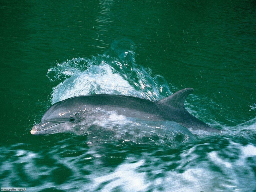 delfini 21