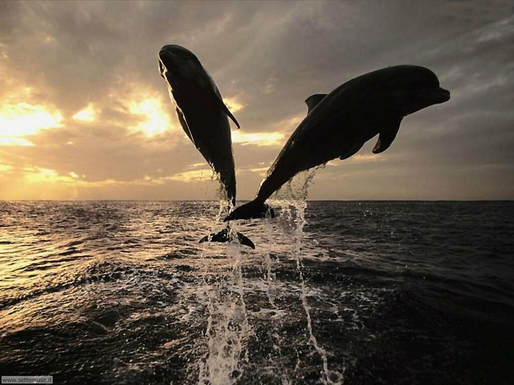 delfini 27