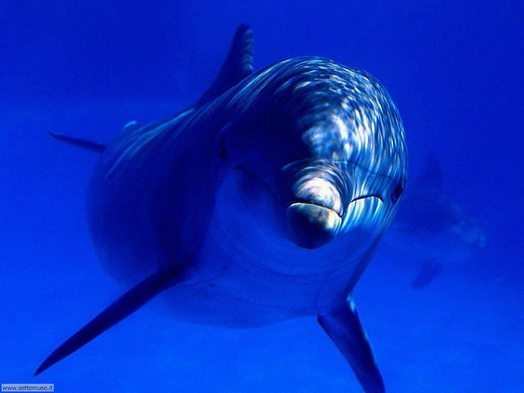 delfini 30