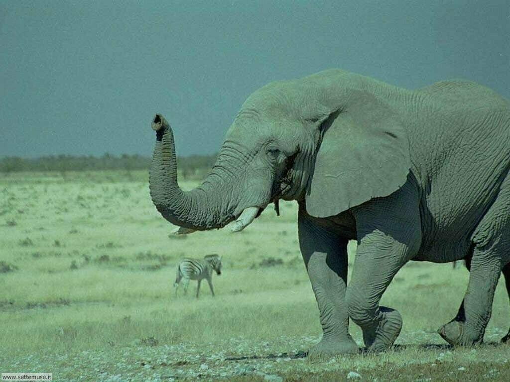 Foto Elefanti 003